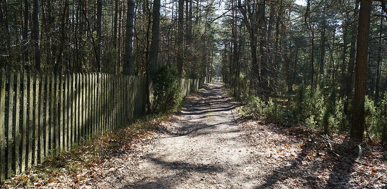 Widok na drogę w lesie Strachów